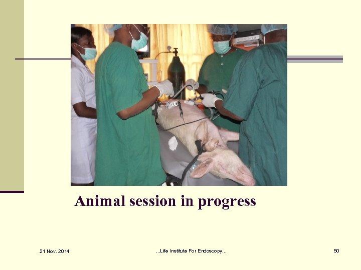Animal session in progress 21 Nov. 2014 . . . Life Institute For Endoscopy.