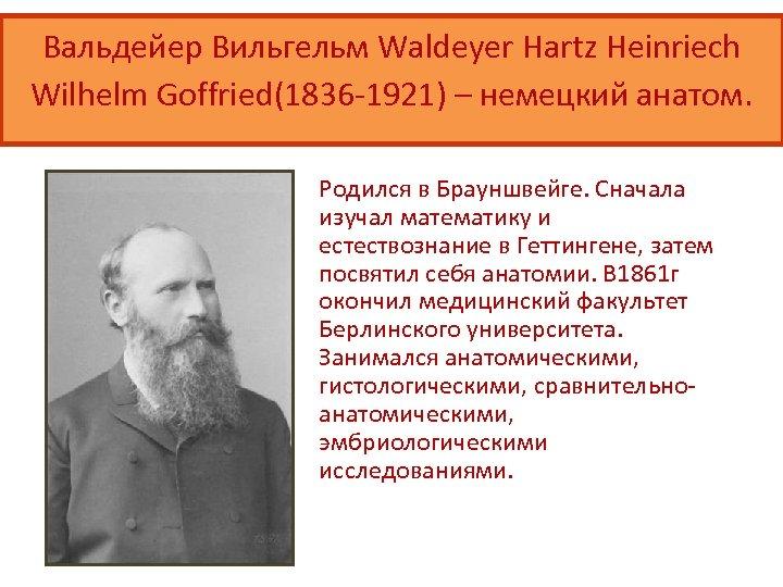Вальдейер Вильгельм Waldeyer Hartz Heinriech Wilhelm Goffried(1836 -1921) – немецкий анатом. Родился в Брауншвейге.