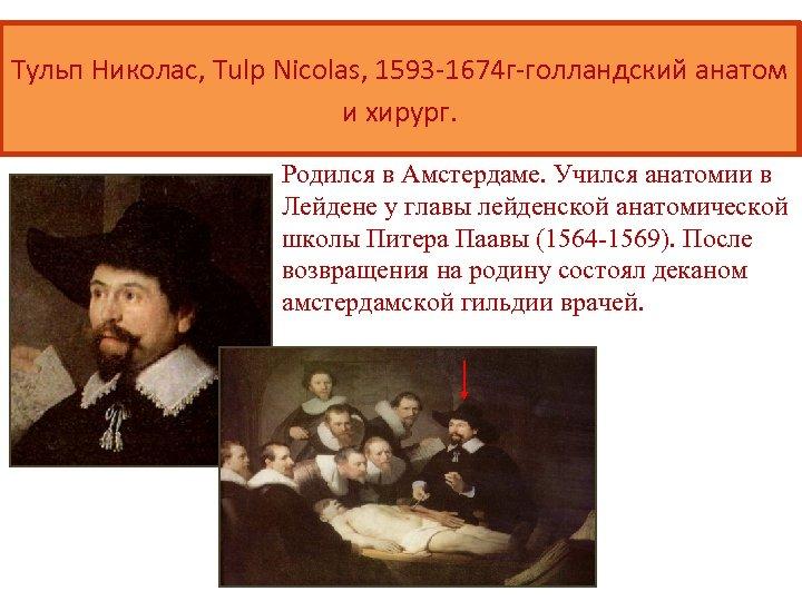 Тульп Николас, Tulp Nicolas, 1593 -1674 г-голландский анатом и хирург. Родился в Амстердаме. Учился