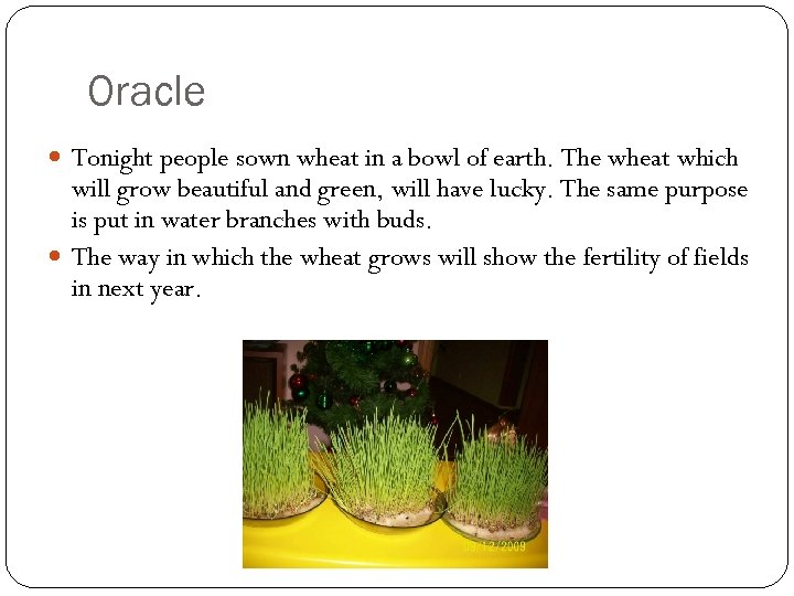 Oracle Tonight people sown wheat in a bowl of earth. The wheat which will