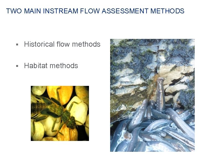 TWO MAIN INSTREAM FLOW ASSESSMENT METHODS § Historical flow methods § Habitat methods