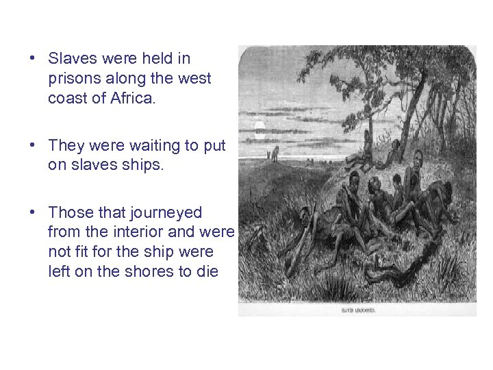 • Slaves were held in prisons along the west coast of Africa. •