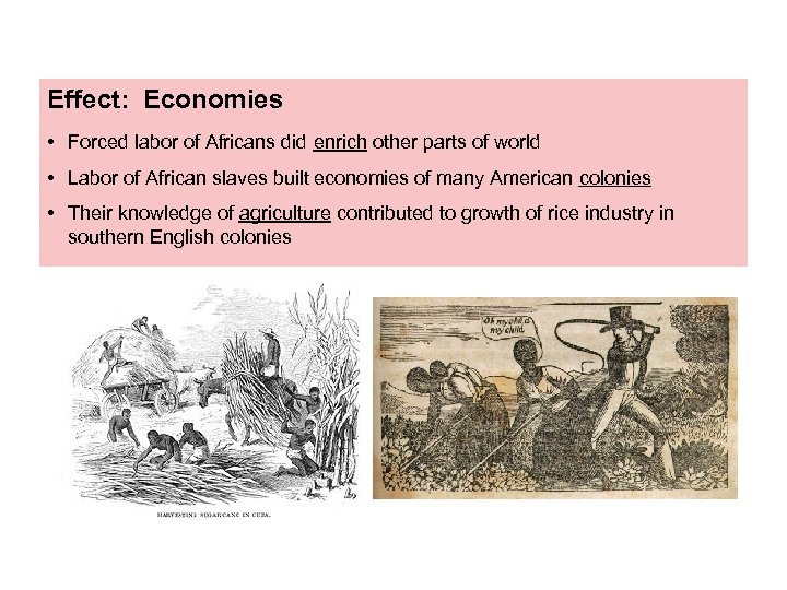 Effect: Economies • Forced labor of Africans did enrich other parts of world •