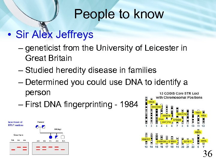 People to know • Sir Alex Jeffreys – geneticist from the University of Leicester