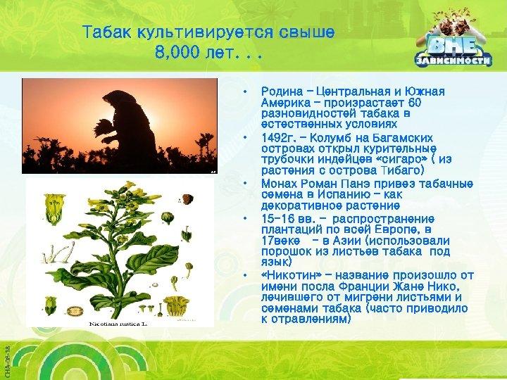 Табак культивируется свыше 8, 000 лет. . . • • • Родина – Центральная