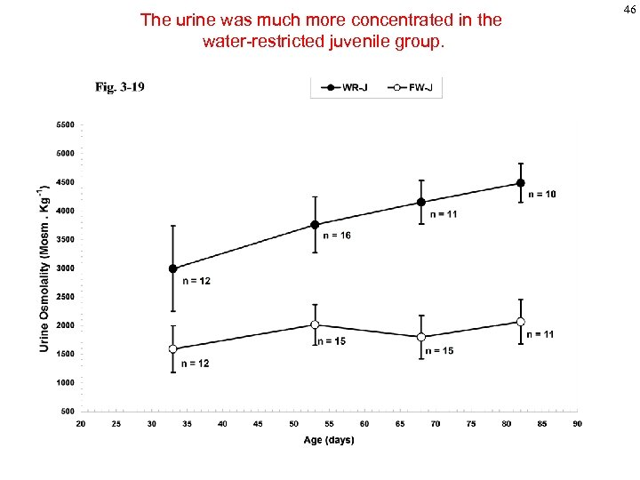 The urine was much more concentrated in the water-restricted juvenile group. 46