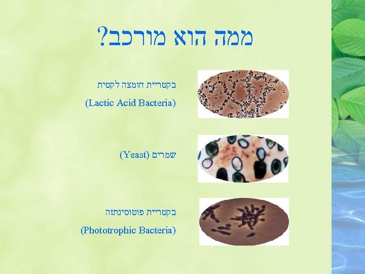 ממה הוא מורכב? בקטריית חומצה לקטית ) (Lactic Acid Bacteria שמרים ) (Yeast