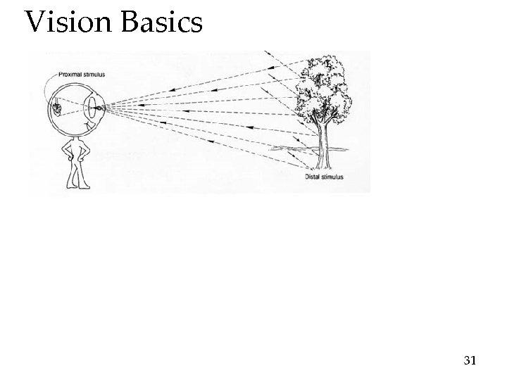 Vision Basics 31