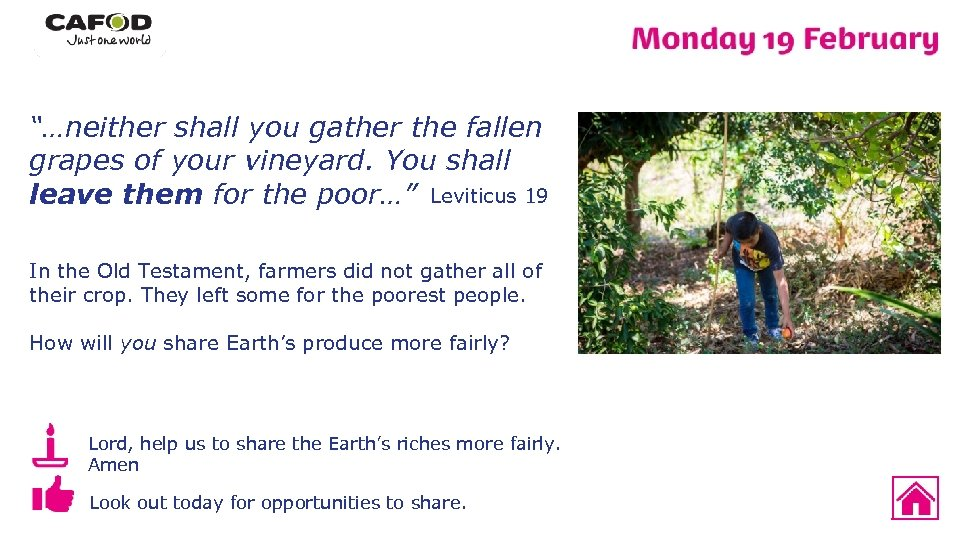 """""""…neither shall you gather the fallen grapes of your vineyard. You shall leave them"""