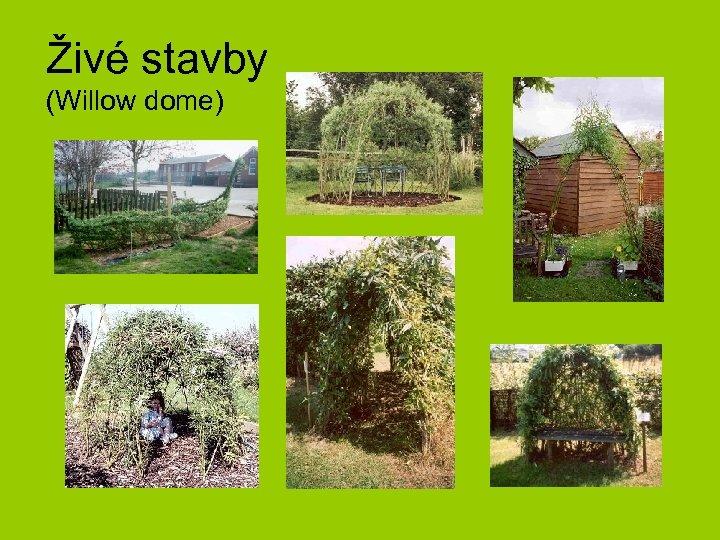 Živé stavby (Willow dome)