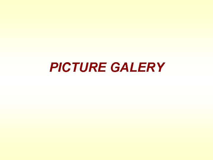 PICTURE GALERY