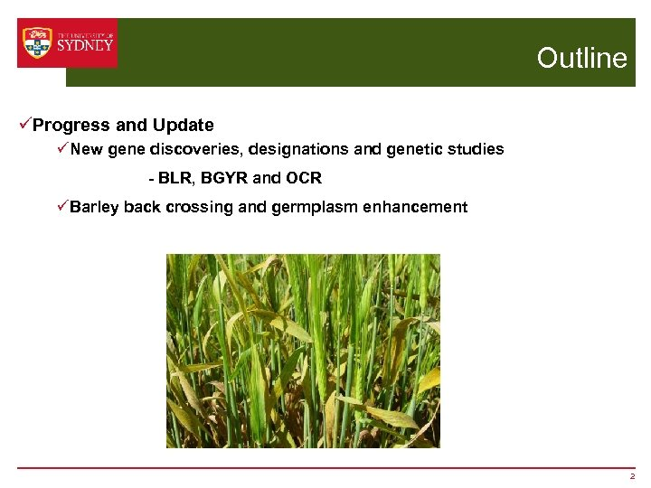 Outline üProgress and Update üNew gene discoveries, designations and genetic studies - BLR, BGYR