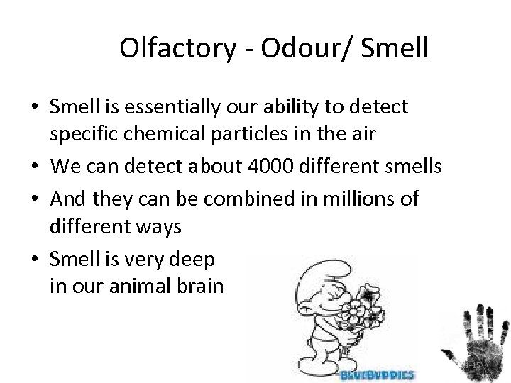 Olfactory - Odour/ Smell • Smell is essentially our ability to detect specific chemical