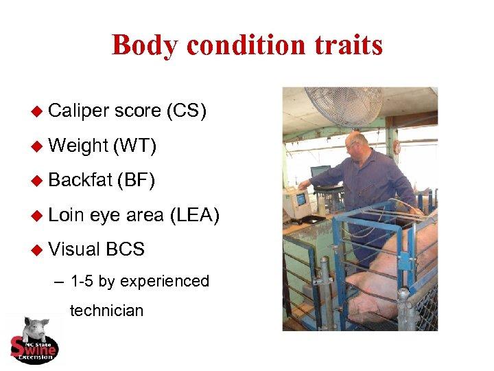 Body condition traits u Caliper score (CS) u Weight (WT) u Backfat (BF) u