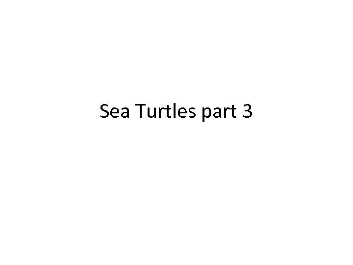Sea Turtles part 3