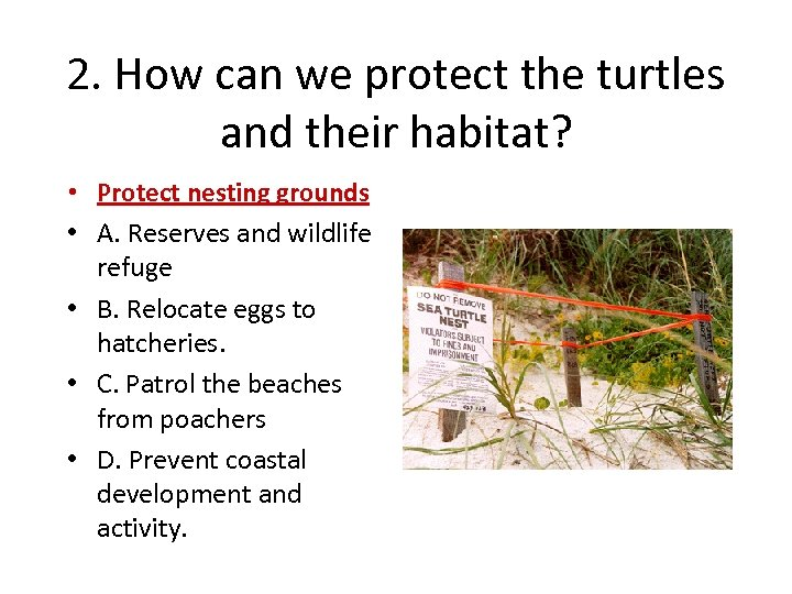 2. How can we protect the turtles and their habitat? • Protect nesting grounds