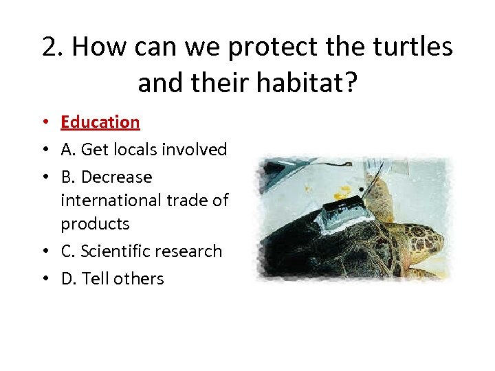 2. How can we protect the turtles and their habitat? • Education • A.