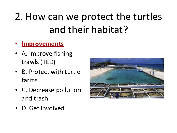 2. How can we protect the turtles and their habitat? • Improvements • A.