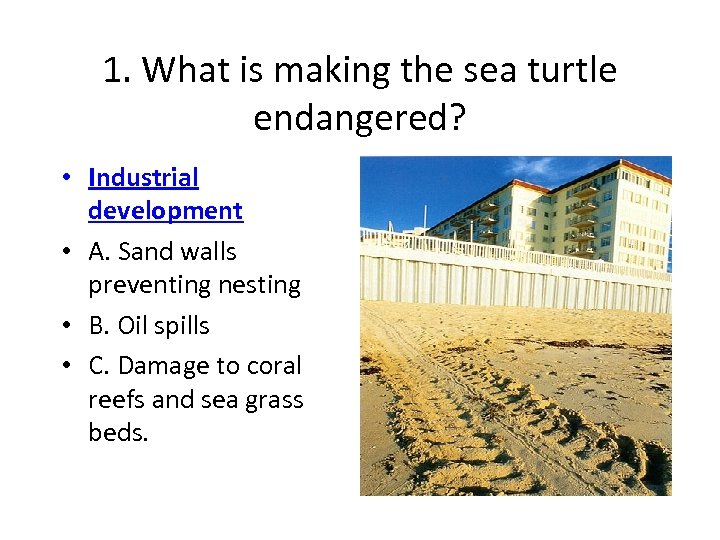 1. What is making the sea turtle endangered? • Industrial development • A. Sand