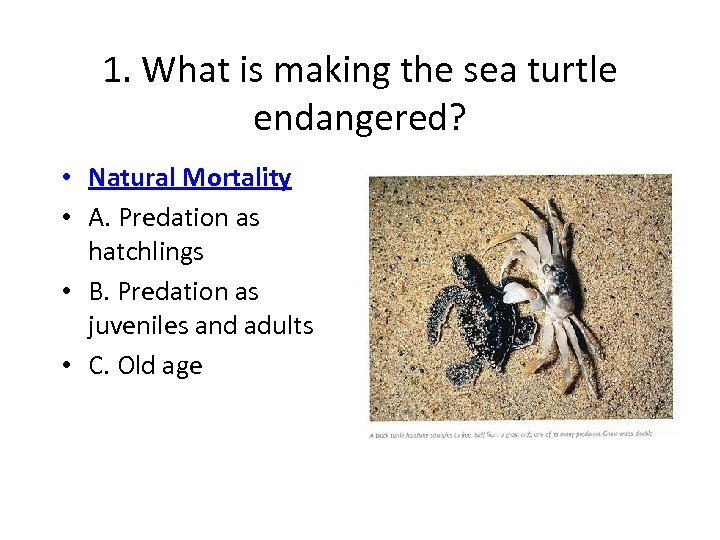 1. What is making the sea turtle endangered? • Natural Mortality • A. Predation