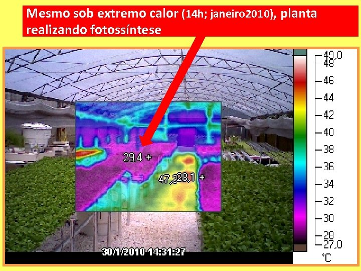 Mesmo sob extremo calor (14 h; janeiro 2010), planta realizando fotossíntese