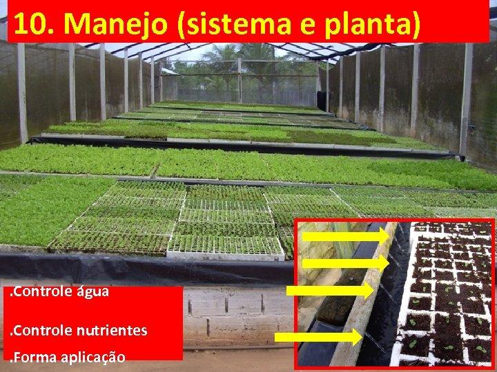 10. Manejo (sistema e planta) . Controle água. Controle nutrientes. Forma aplicação
