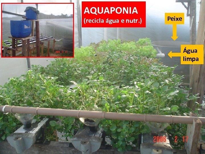 AQUAPONIA (recicla água e nutr. ) Peixe Água limpa