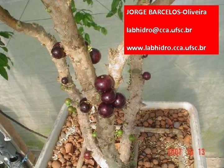 JORGE BARCELOS-Oliveira labhidro@cca. ufsc. br www. labhidro. cca. ufsc. br