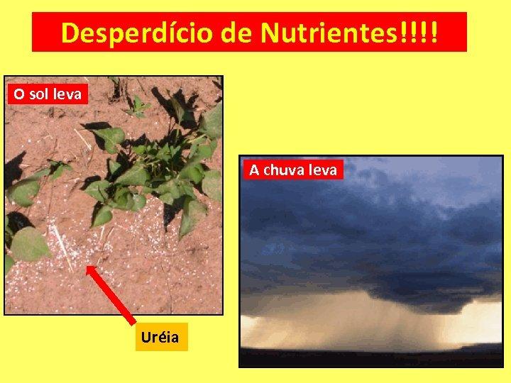 Desperdício de Nutrientes!!!! O sol leva A chuva leva Uréia