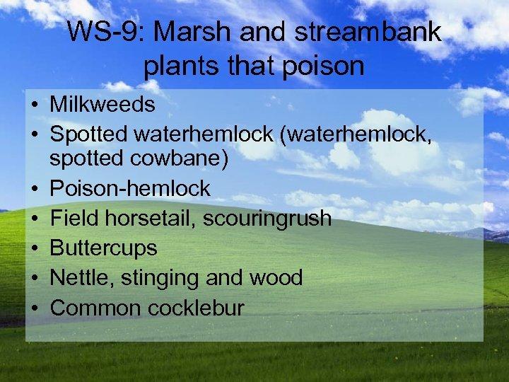 WS-9: Marsh and streambank plants that poison • Milkweeds • Spotted waterhemlock (waterhemlock, spotted