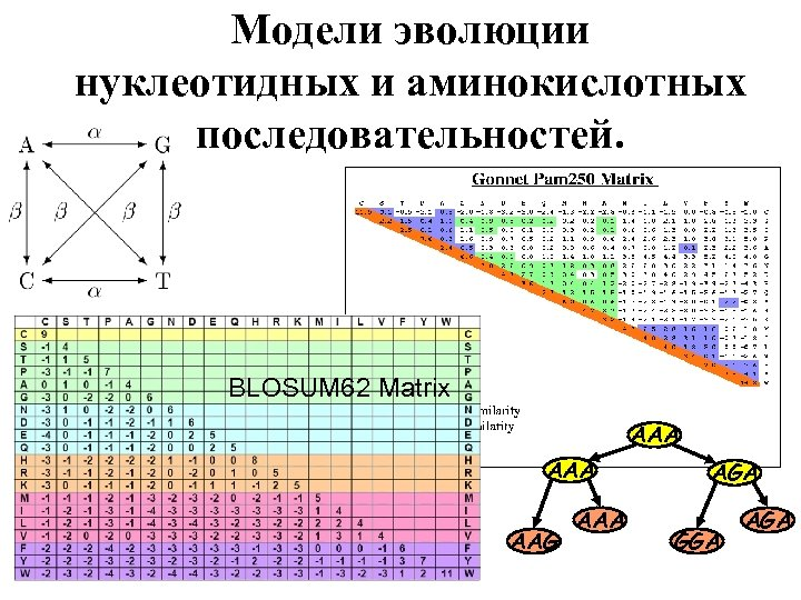 Модели эволюции нуклеотидных и аминокислотных последовательностей. BLOSUM 62 Matrix AAA AAG AAA AGA GGA