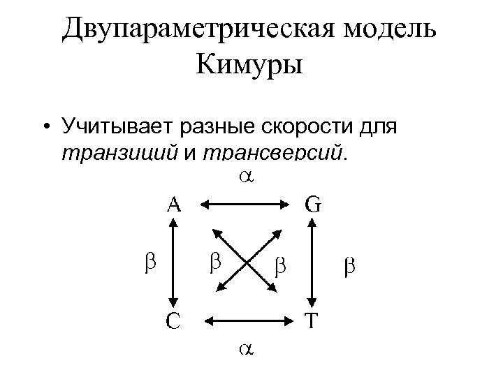 Двупараметрическая модель Кимуры • Учитывает разные скорости для транзиций и трансверсий.