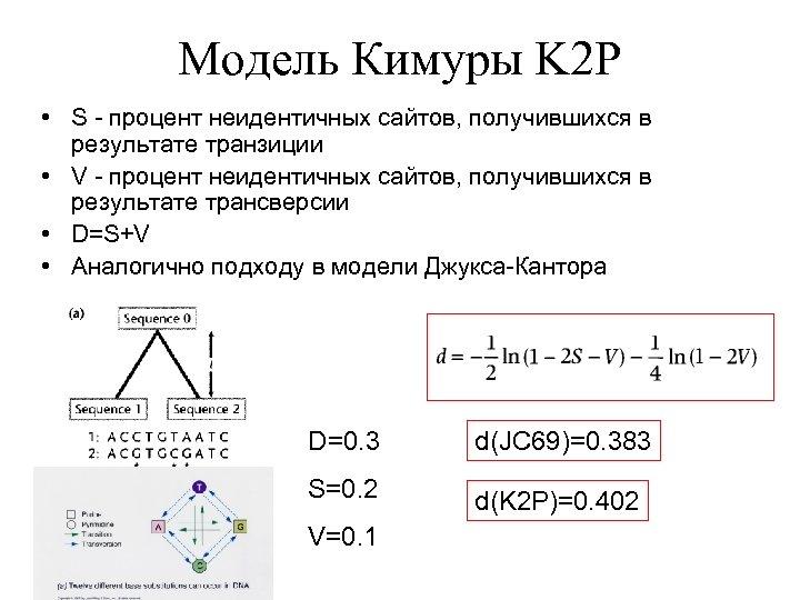 Модель Кимуры K 2 P • S - процент неидентичных сайтов, получившихся в результате
