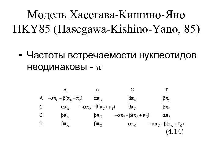 Модель Хасегава-Кишино-Яно HKY 85 (Hasegawa-Kishino-Yano, 85) • Частоты встречаемости нуклеотидов неодинаковы -