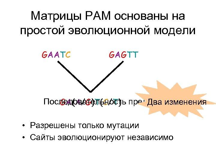 Матрицы PAM основаны на простой эволюционной модели GAATC GAGTT Последовательность предка? Два изменения GA(A/G)T(C/T)