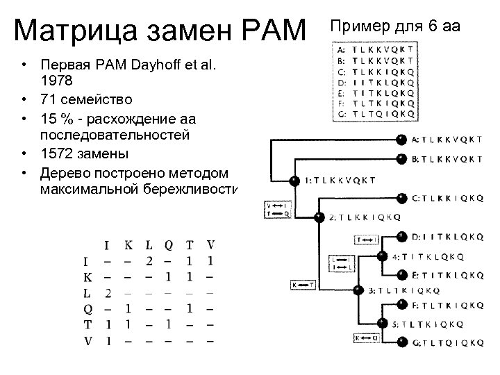 Матрица замен PAM • Первая PAM Dayhoff et al. 1978 • 71 семейство •