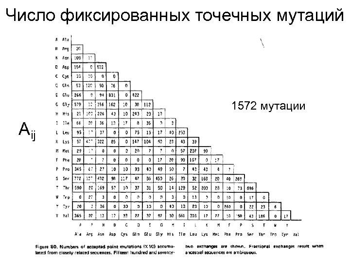 Число фиксированных точечных мутаций 1572 мутации A ij
