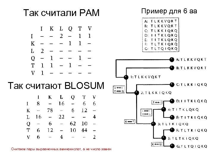 Так считали PAM Так считают BLOSUM Считаем пары выравненных аминокислот, а не число замен