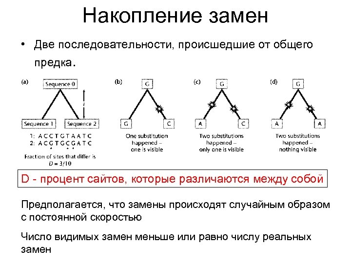 Накопление замен • Две последовательности, происшедшие от общего предка. D - процент сайтов, которые