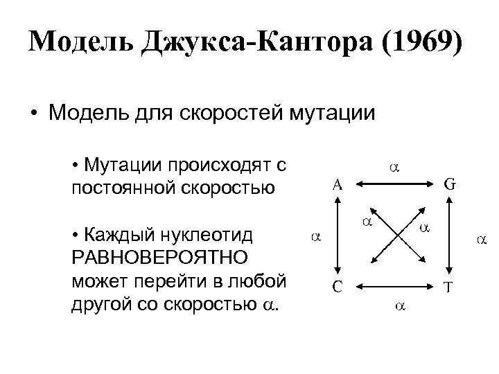 Модель Джукса-Кантора (1969) • Модель для скоростей мутации • Мутации происходят с постоянной скоростью