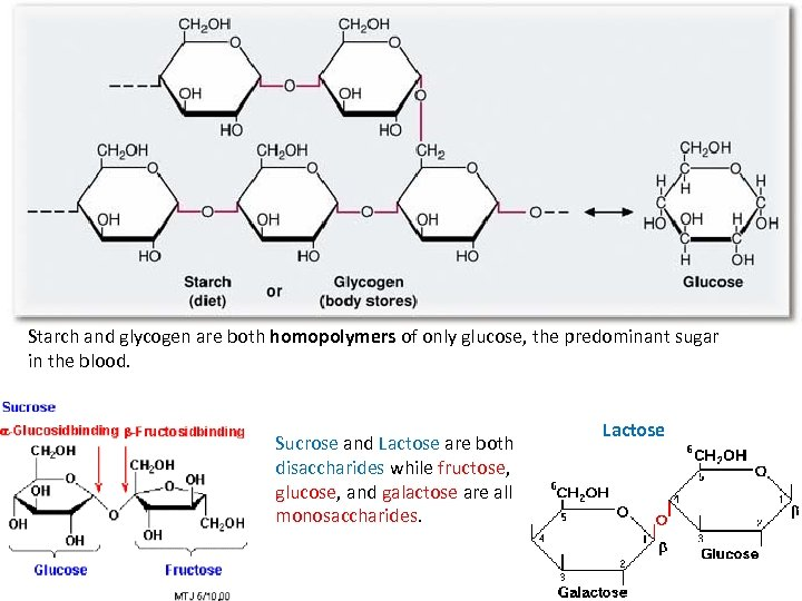 Starch and glycogen are both homopolymers of only glucose, the predominant sugar in the