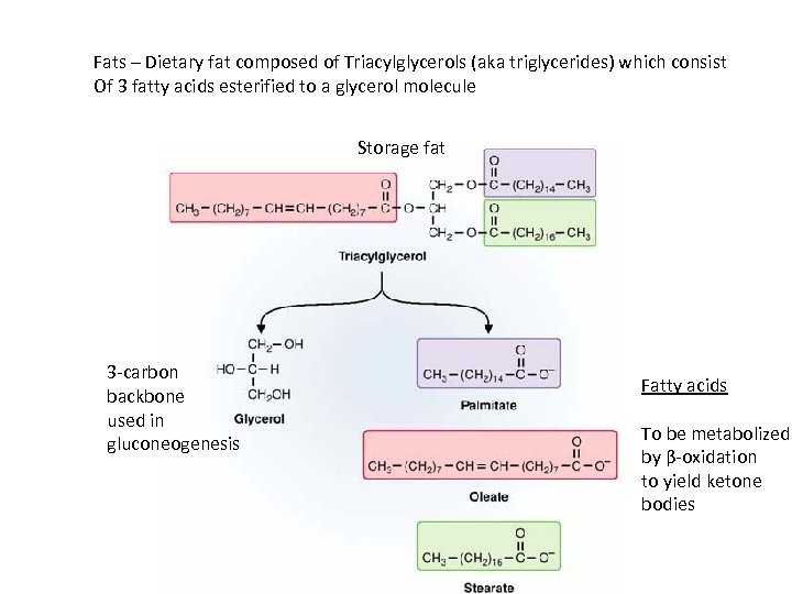Fats – Dietary fat composed of Triacylglycerols (aka triglycerides) which consist Of 3 fatty
