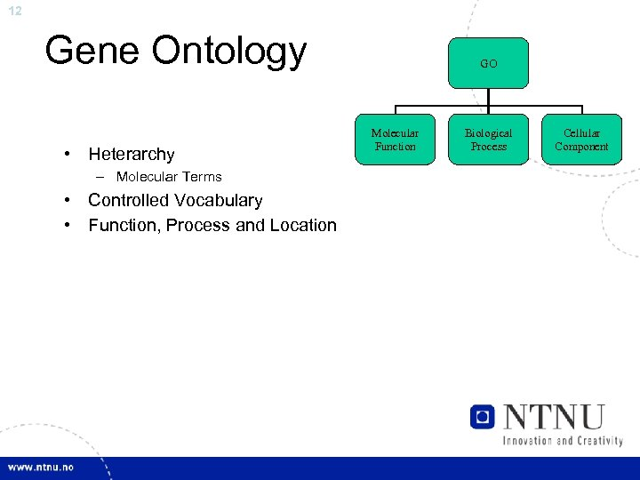 12 Gene Ontology • Heterarchy – Molecular Terms • Controlled Vocabulary • Function, Process