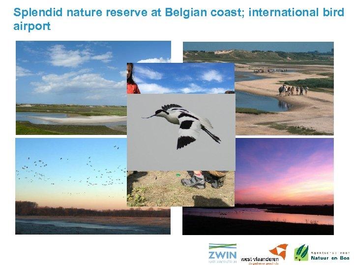 Splendid nature reserve at Belgian coast; international bird airport