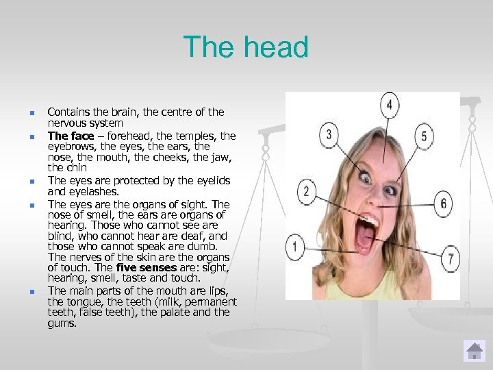 The head n n n Contains the brain, the centre of the nervous system