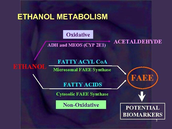 ETHANOL METABOLISM Oxidative ADH and MEOS (CYP 2 E 1) ETHANOL ACETALDEHYDE FATTY ACYL