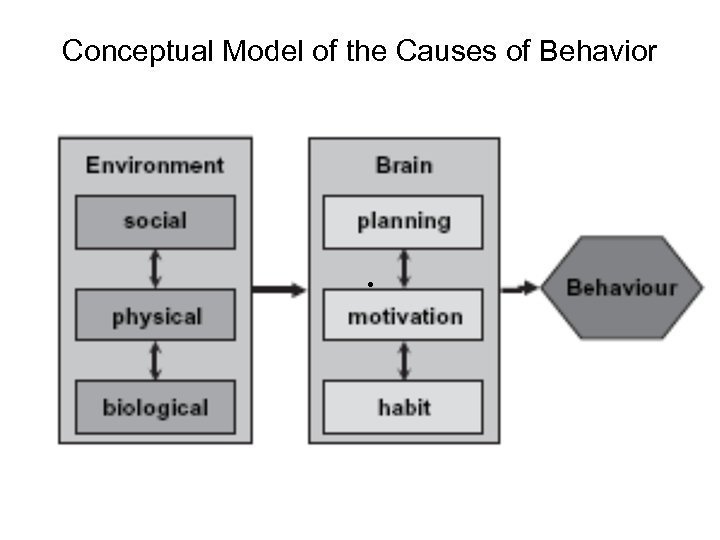 Conceptual Model of the Causes of Behavior •