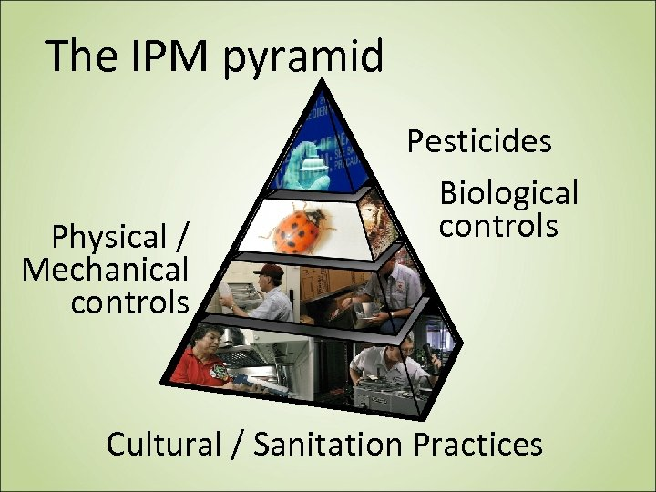 The IPM pyramid Physical / Mechanical controls Pesticides Biological controls Cultural / Sanitation Practices