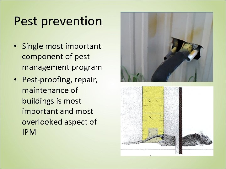 Pest prevention • Single most important component of pest management program • Pest-proofing, repair,