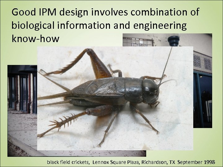 Good IPM design involves combination of biological information and engineering know-how black field crickets,